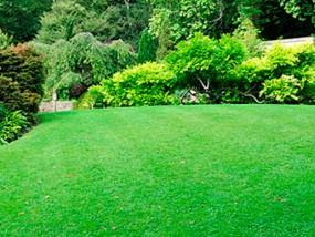 jardi centre verd girona
