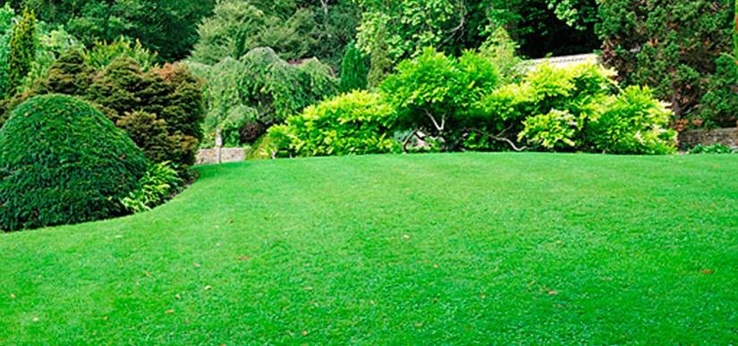 C sped y semillas centre verd - Cesped natural ...