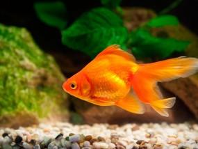 peixos girona